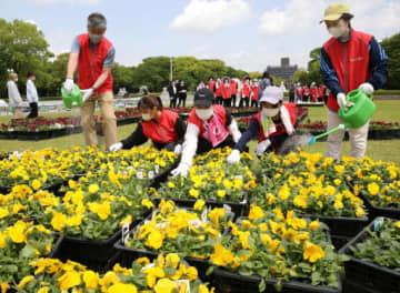 平和記念公園の芝生広場で花育の花を飾り付ける、もみじ銀行の行員たち(撮影・大川万優)