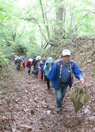 芽吹きの時季を迎えた塩の道を歩く参加者=2日、糸魚川市