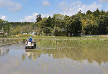 田植えが進み、青々とした苗が並ぶ水田=2日午前、常陸太田市里野宮町