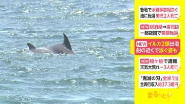 イルカ2頭出没 船の近くで泳ぐ姿も 画像