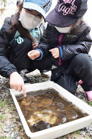 採集したエゾアカガエルなどの卵を観察する子どもたち