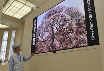 伊予銀行八幡浜支店の大型電子看板で上映されている角田さんの写真作品
