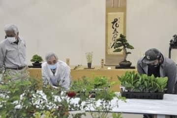 【会員らが丹精した盆栽や山野草=四日市市安島の市文化会館で】