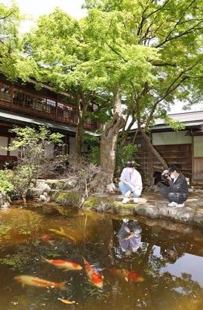 新緑が鮮やかな西脇邸で散策を楽しむ人々=4日、新潟県小千谷市本町2
