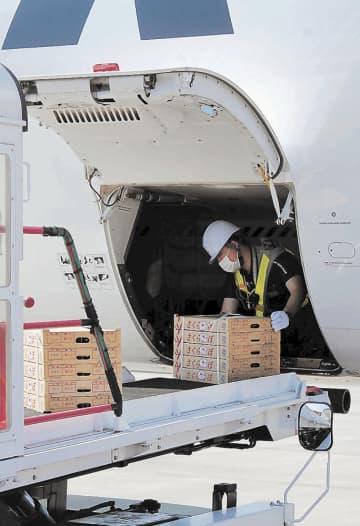 ニュース画像:サクランボ、空を飛ぶ 山形空港から2年ぶり全国へ空輸