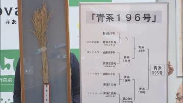 2年後に市場デビュー予定 青森県産米・新品種の名称公募スタート 「青天の霹靂」に続く主力品種を目指す 画像