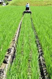 中干し作業に取り組む田んぼ。田植え機を改造した機械で「溝切り」をしていく=三木市吉川町実楽