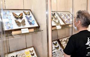 美しいチョウの標本が並んだ展示会