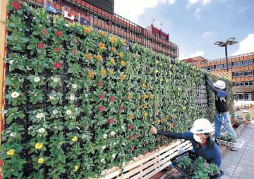 色とりどりのジニアが植えられた立体花壇=15日午前10時半、金沢市役所庁舎前広場