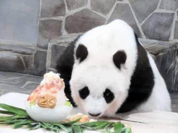 神戸のパンダ「タンタン」26歳に 体調考慮しイベント自粛、飼育員手作りケーキでお祝い