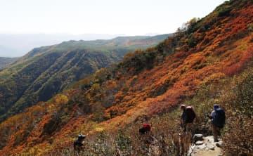 北海道・大雪山系、秋色に染まる 青空に紅葉のパノラマ