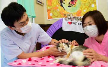 3本脚の「ミケちゃん」本に 市川・治療院の看板猫 SNSで人気、愛らしい日常の姿紹介