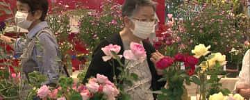 バラやキキョウ 群馬県内で生産される美しい花々を紹介