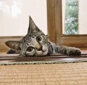 右手が浮いてる!?話題の「鼻スポ」に挑戦した猫がホラー風に!「ガチでビビった」「心霊現象かと」