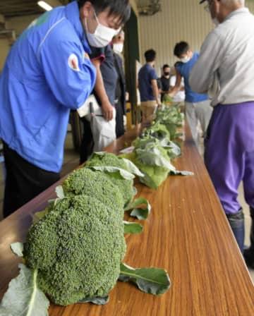 鳥取県大山町で開かれたブロッコリーの「目合わせ会」=14日午後