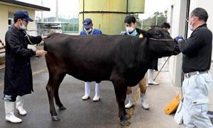 高等登録審査に合格した雌牛「ひでこ」