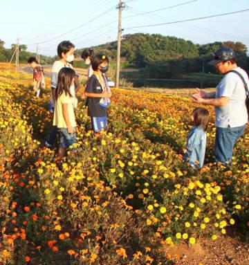 休耕地を彩るマリーゴールドの景観を楽しむ子どもら=平戸市田平町