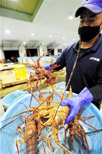 水揚げされたイセエビを計量する漁協職員=15日午前5時半ごろ、天草市牛深町