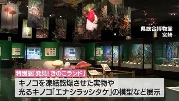 光るキノコも 県総合博物館で特別展「発見!きのこランド」・宮崎県