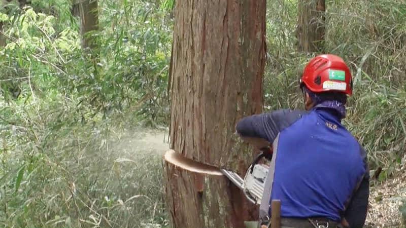 これぞプロ!危険な木から生活を守る「特殊伐採」って何?