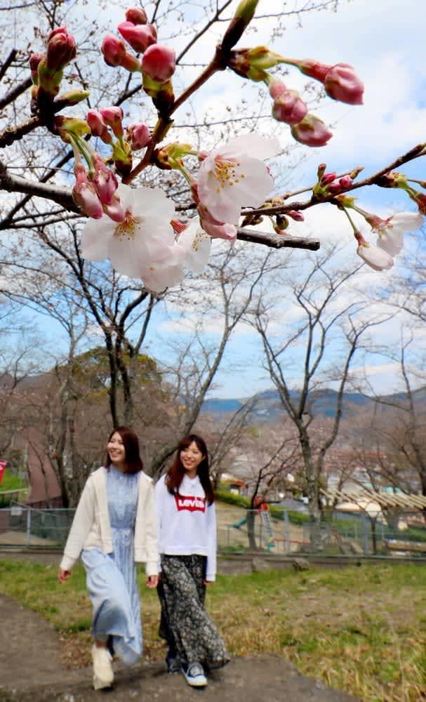 長崎で桜開花 昨年より4日遅く