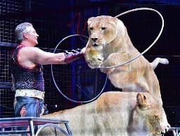 ライオンの輪くぐりなど