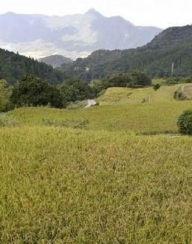 大作山の棚田