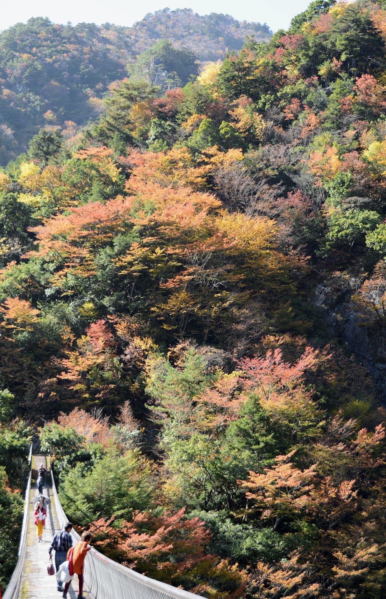 五家荘の梅の木轟のつり橋