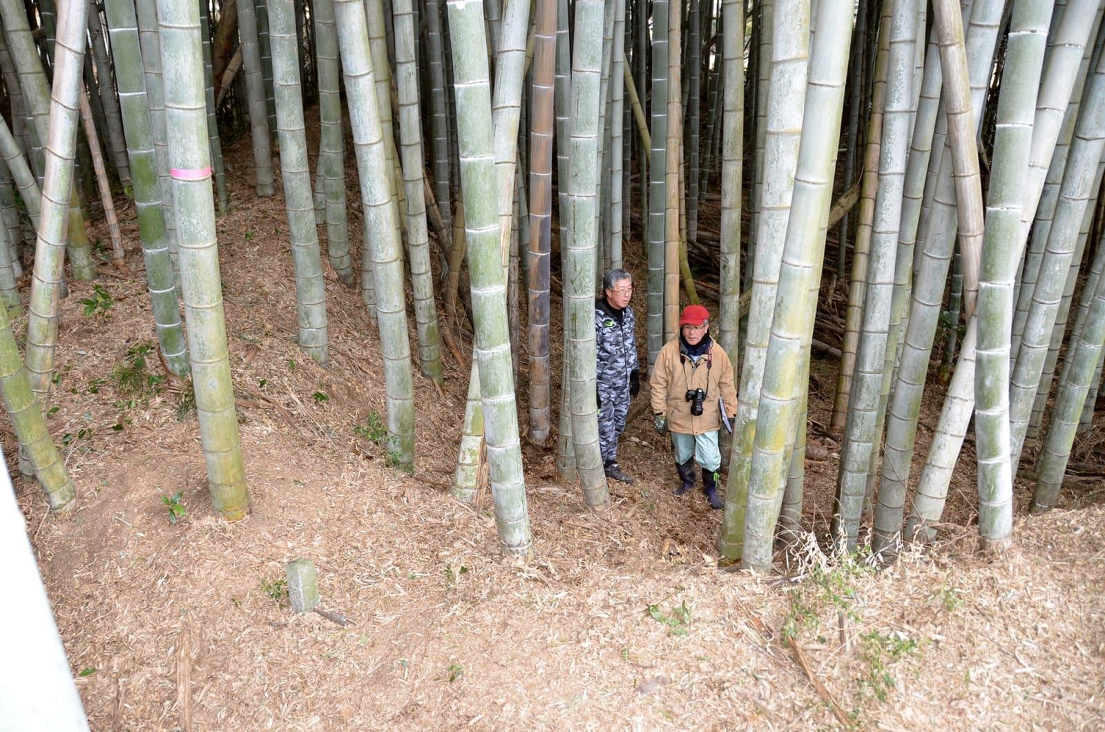 竹林に覆われた掩体壕跡に立つ古閑宏二郎さん(左)と高谷和生さん