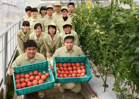 トマトのK-GAP認証を受けた国分中央高校の生徒=霧島市の同校小畑農場