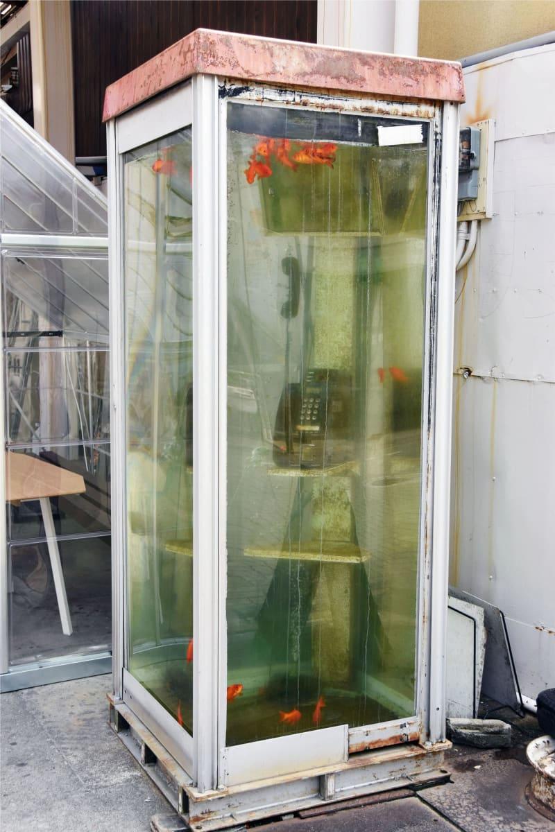奈良県大和郡山市の商店街に設置されていた「金魚電話ボックス」のオブジェ=4日