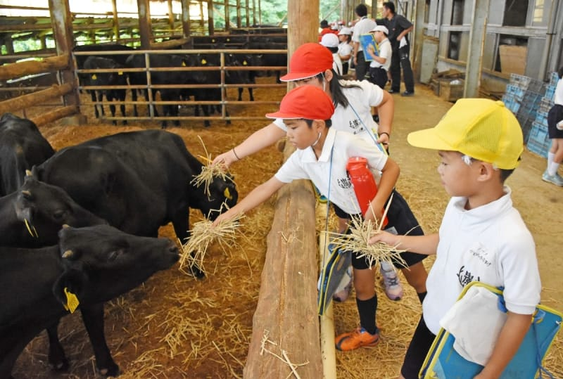 畜舎を見学し、牛と触れ合う子どもたち=みやき町の大富牧場