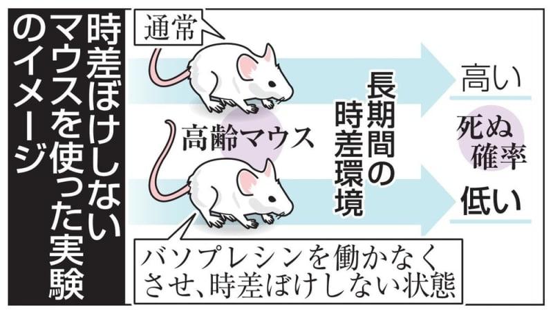 時差ぼけしないマウスはタフ 京...