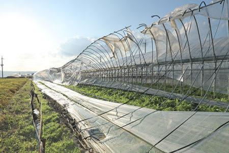 台風の農業施設被害、平成最悪 ...