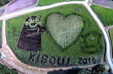 「くまモン」や「KIBOU」の文字などが浮かび上がる四季彩のむらの田んぼアート(雀ケ野さん提供)