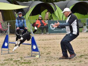 犬が俊敏な動きを披露し会場を沸かせているアジリティー競技