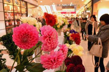 県内で生産された色とりどりの花が楽しめる「みやざき花の祭典2017」=11日午後、宮崎市・イオンモール宮崎