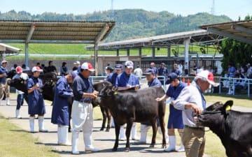 15頭が最終選考に進んだ宮崎中央地域の代表牛決定検査=19日午前、宮崎市のJA宮崎中央家畜市場