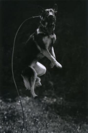 収蔵作品「犬の戦士団」シリーズの1点