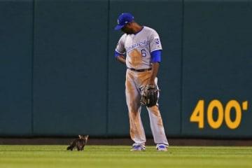 センターを守るケインのすぐそばを通る子猫【写真:Getty Images】