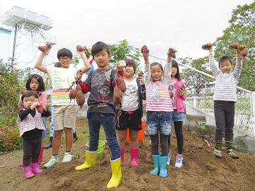 約100個のサツマイモ(紅東)の収穫に、参加した子供達からは歓声が上がった