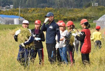 ツルの飛来地・鹿児島県出水市に寄贈する二番穂を収穫する森永小の児童ら