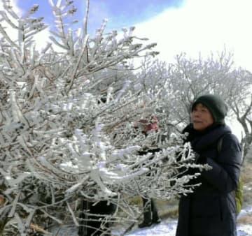 枝に付いた霧氷を眺める観光客=19日、別府市の鶴見岳山上