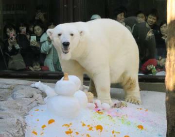 愛媛県立とべ動物園で開かれたホッキョクグマ「ピース」の誕生会=2日午後、愛媛県砥部町