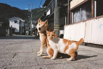 幼い頃に母を亡くしたネコと母親代わりのイヌ=広島県福山市 ©Mitsuaki Iwago