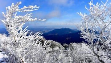 初冠雪した鰐塚山の山頂で見られた樹氷=11日午前、宮崎市田野町