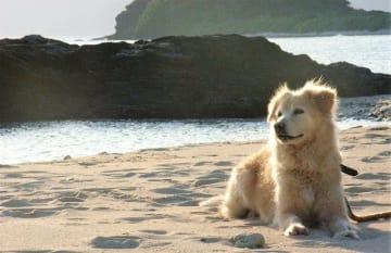 クララ マリリンに逢いたい マリリンの孫に逢いたい シロ 孫 犬 イヌ いぬ