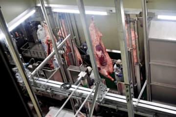牛肉の処理過程が2階から見学できる新施設(京都市南区)