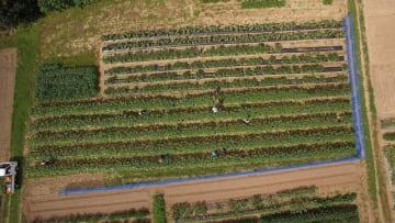 秋田市の畑の様子(画像はプレスリリースより)