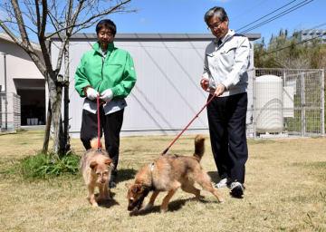 保護犬を散歩させるみやざき動物愛護センターの委託職員=宮崎市清武町木原